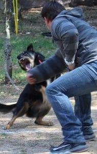 DOG AGRESSIVE