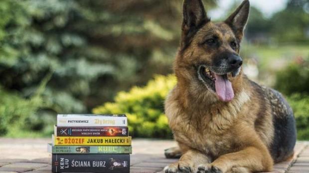 dog-education