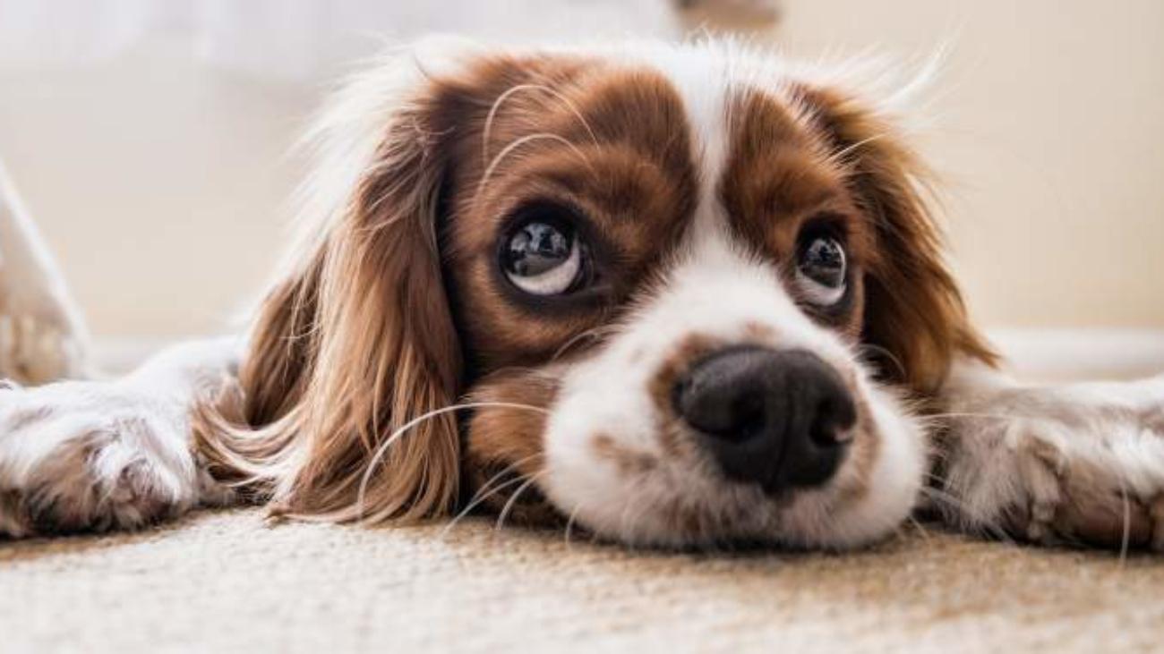 tuto-dog
